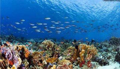 komodo diving