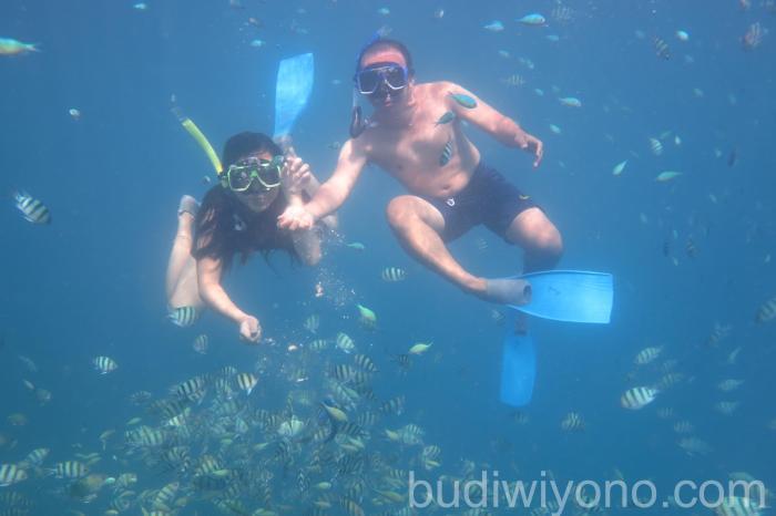 Snorkeling di Pantai Karimunjawa