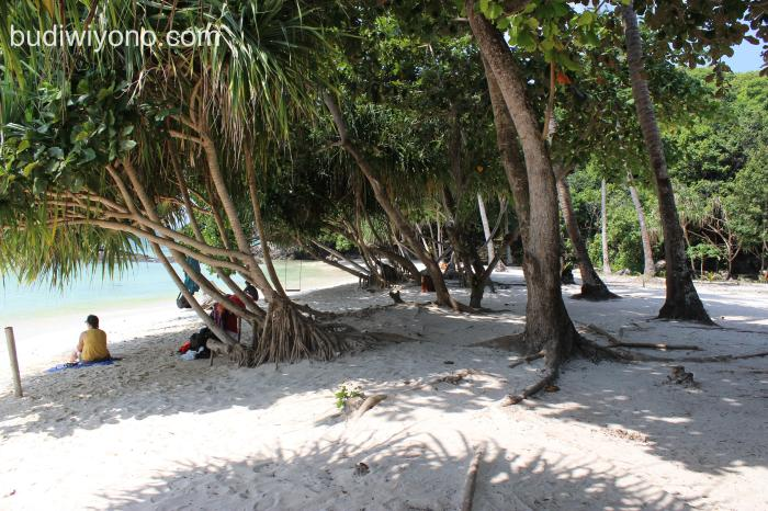 Pantai Karimunjawa Rindang dan Sejuk