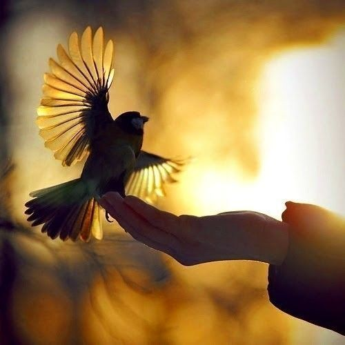 let_birds_fly_free